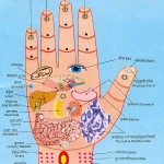 Senses related to various body parts in our palm